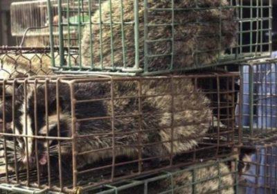 animales-salvajes-en-china